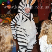 16-zebra